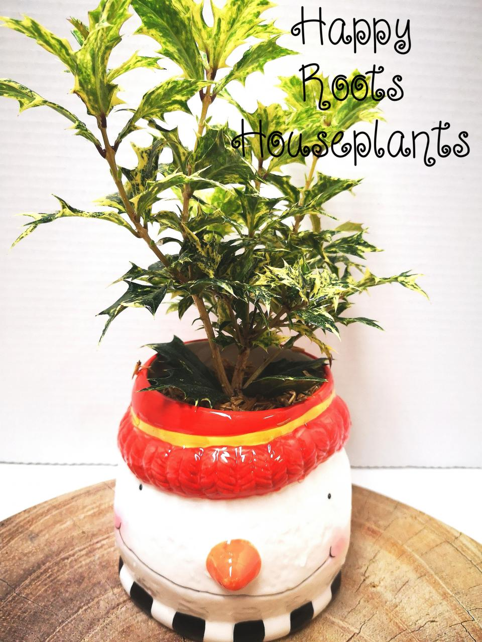 Holly Berry snowman - Happy Roots Houseplants - Kingston Indoor Plant Shop