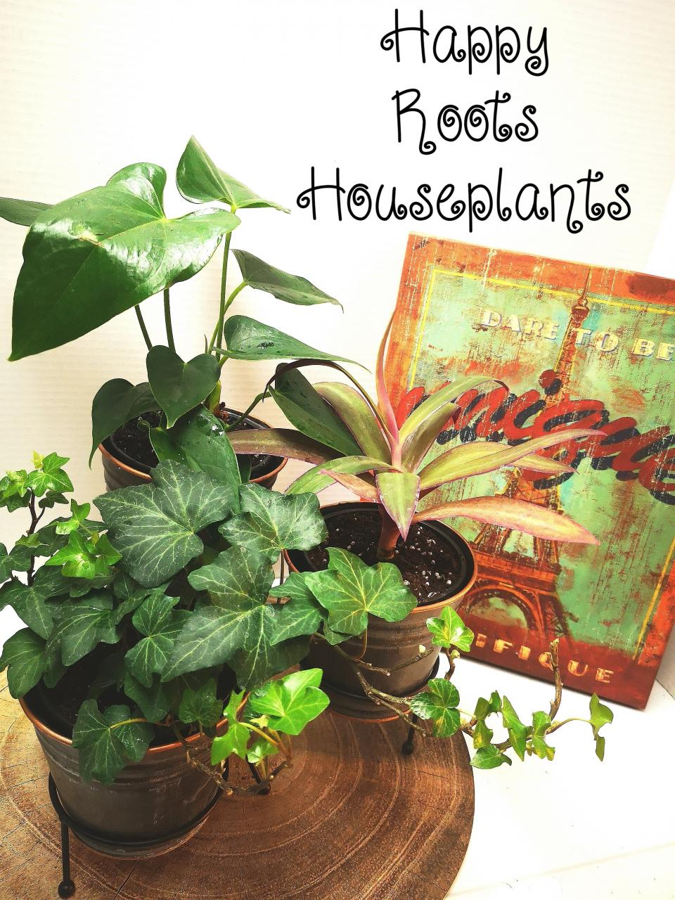 Table top plant stand set - Happy Roots Houseplants - Kingston Indoor Plant Shop