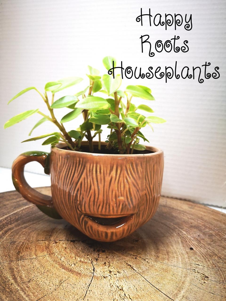 Groot mug with Peperomia - Happy Roots Houseplants - Kingston Indoor Plant Shop