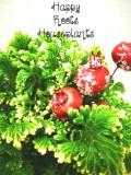 Frosty Fern - Happy Roots Houseplants - Kingston Indoor Plant Shop