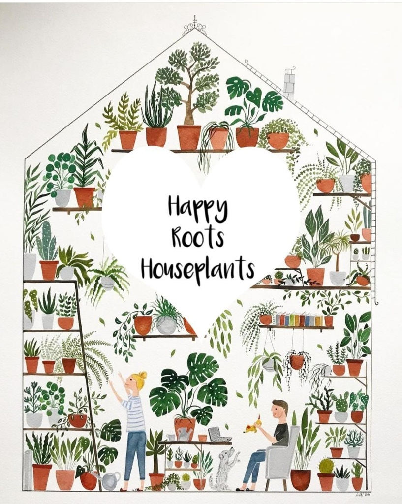 Happy Roots Houseplants Kingston Shop Owner Alanna